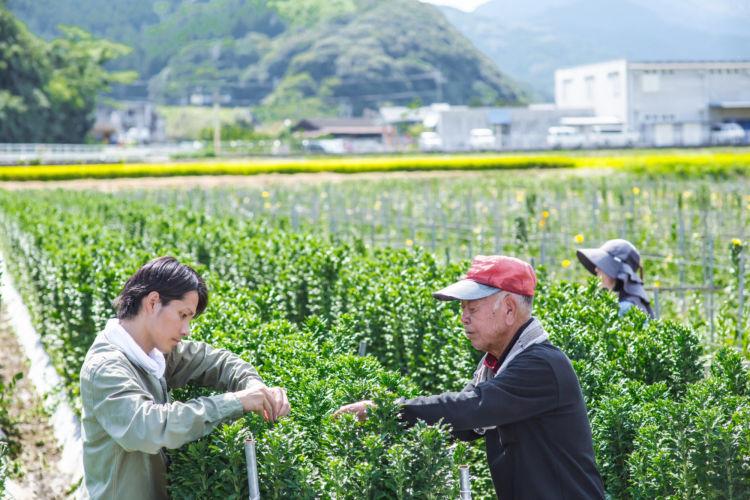 花き栽培農家での技術習得