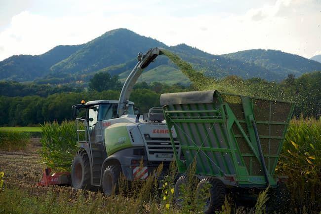 飼料用とうもろこしの青刈り収穫とサイレージ