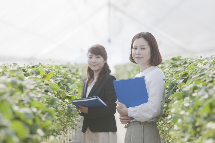 農業経営アドバイザーになるには? 役割や試験内容、合格率を解説