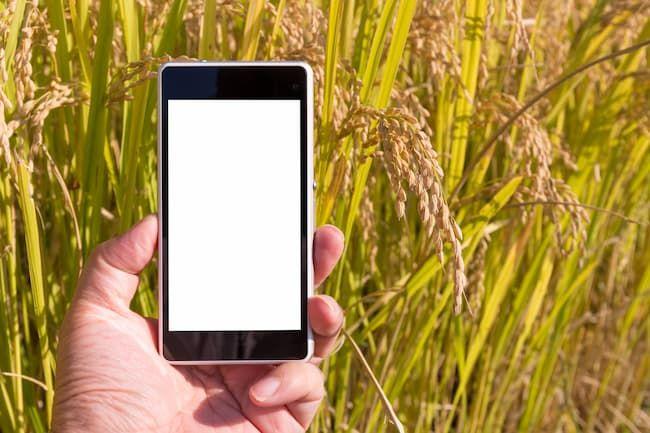アプリによる稲の収穫適期診断 イメージ