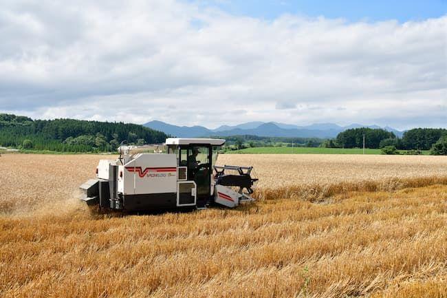 普通型コンバインによる麦の収穫