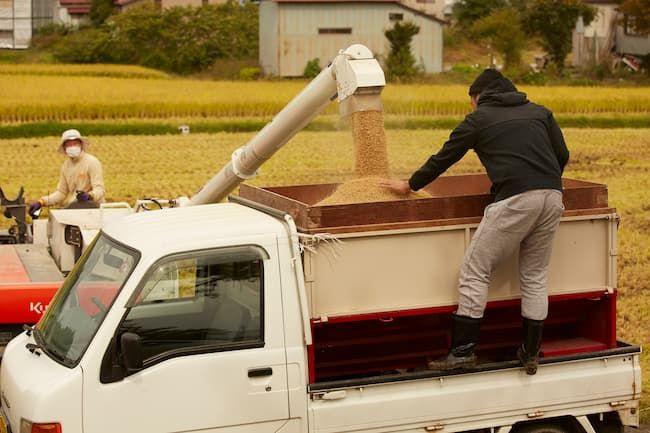 自脱型コンバイン(グレンタンク式)の籾排出