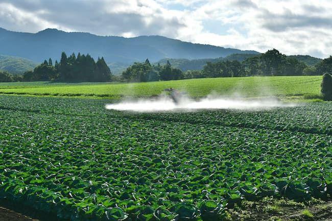 キャベツの農薬散布