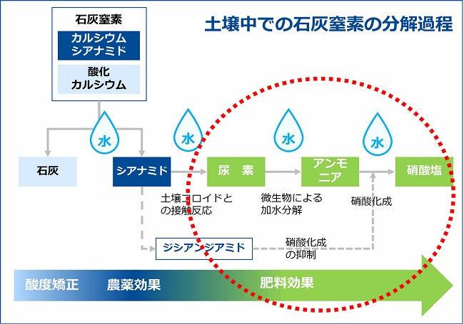 土壌中での石灰窒素の分解過程と農薬効果・肥料効果