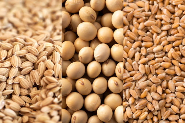 主要農作物の種子 種もみ(稲)、大豆、小麦