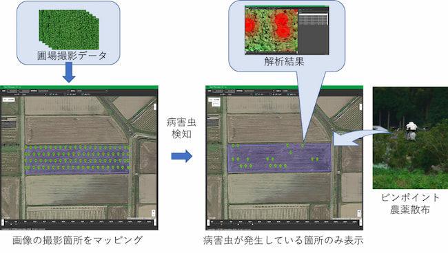 兵庫県篠山市で「丹波黒 大豆・枝豆」のピンポイント農薬散布を用いた栽培を実施