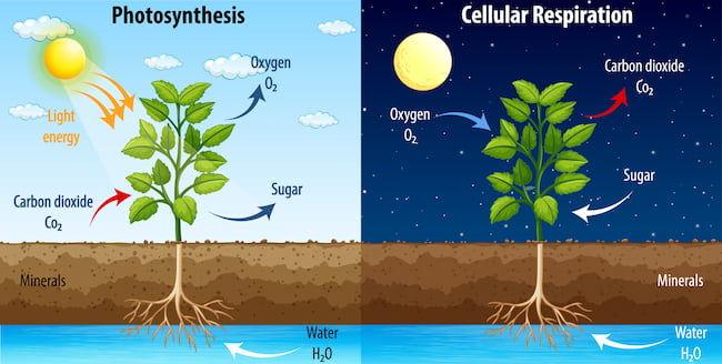 植物の光合成・呼吸と二酸化炭素の関係