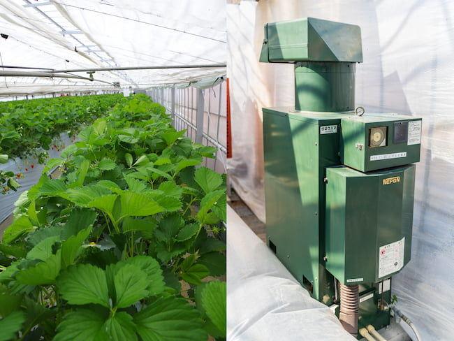 イチゴ栽培ハウスの二酸化炭素発生装置