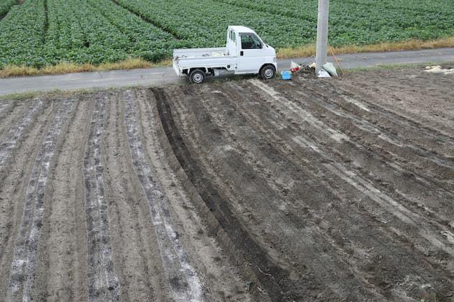 ほうれん草 作期をずらした露地栽培での施肥