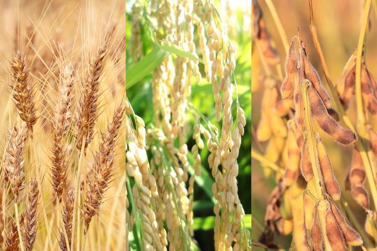 麦、米、大豆